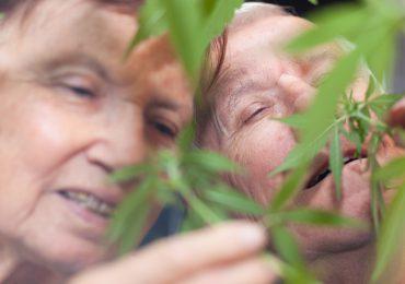 Australia empezará pruebas de tratamiento para la demencia con marihuana medicinal