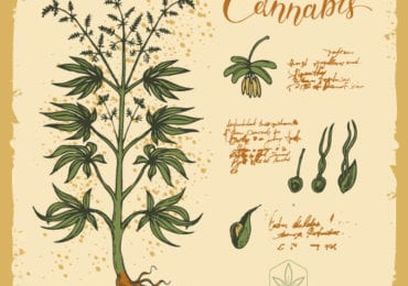HISTORIA DEL CANNABIS Conociendo a la marihuana - Cap. 2: La planta
