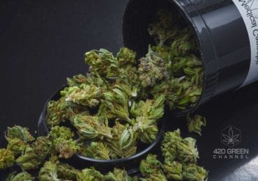 Cannabis medicinal como tratamiento para el trastorno por uso de sustancias