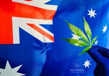 Australia: Pacientes de cannabis medicinal recurren al mercado negro por altos precios de laboratorios